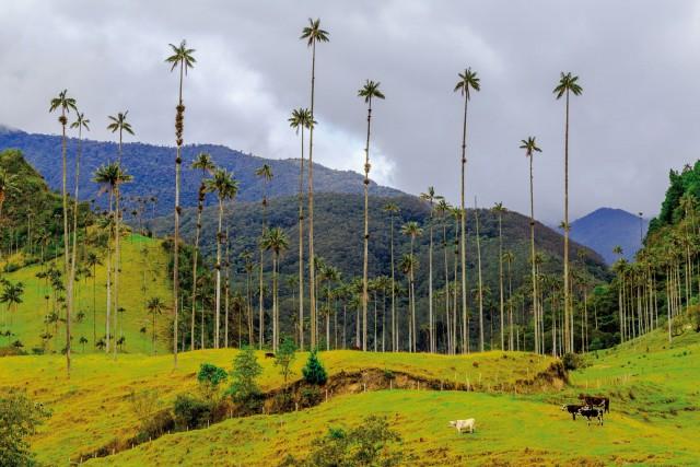 Colombie vallée de Cocora