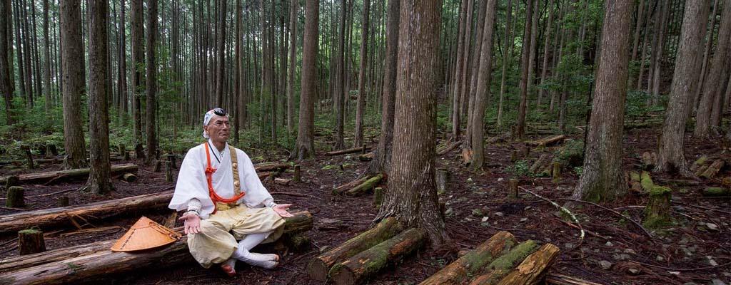 Le shinrin yoku, ou l'art de prendre des bains de forêt - A/R Magazine voyageur 2018