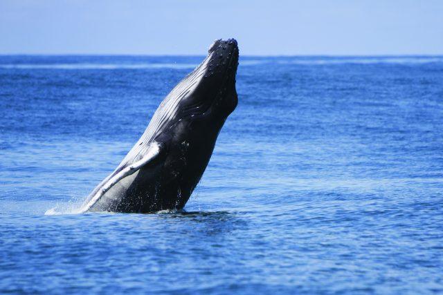 Au rendez-vous des baleines au Parque Nacional Marino Ballena - A/R Magazine voyageur 2019