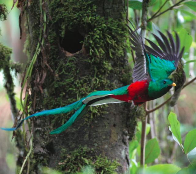 Voir un quetzal resplendissant - A/R Magazine voyageur